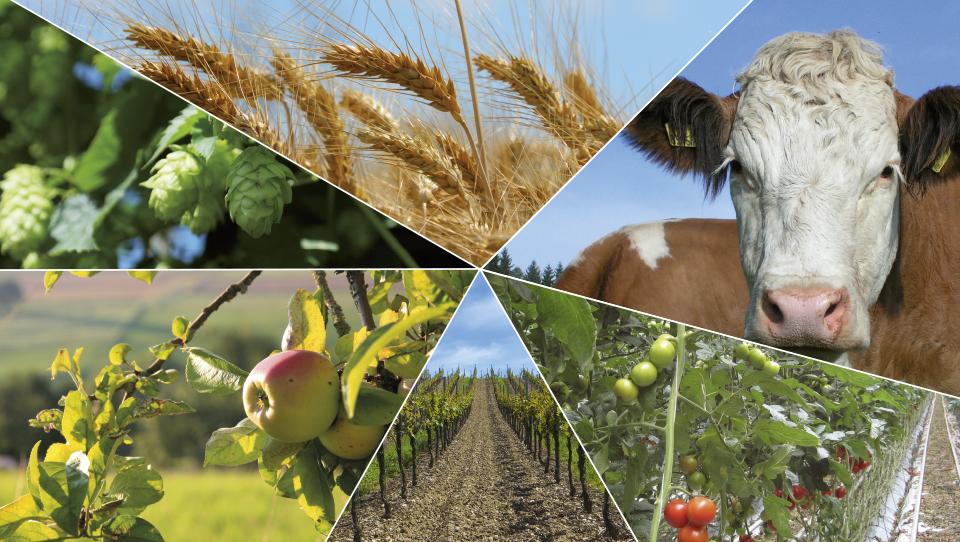 Podnebne spremembe - nov izziv v prihodnosti za slovenske kmetovalce