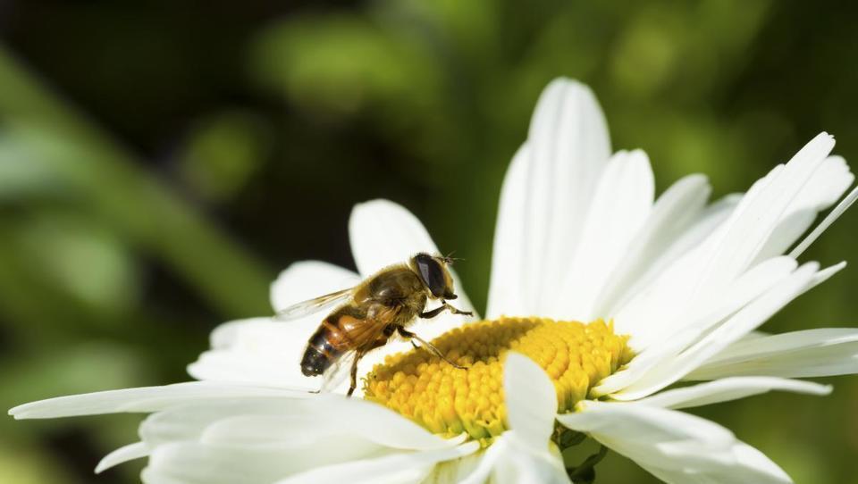 (SUPERBIROKRACIJA) Čebelarji in vinarji, pripravite se, po novem ste embalerji!