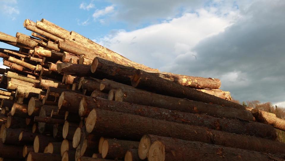 V tem tednu bosta deveta in deseta dražba lesa iz državnih gozdov