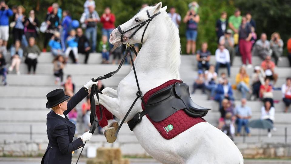 Bo Kobilarna Lipica končno na konju?