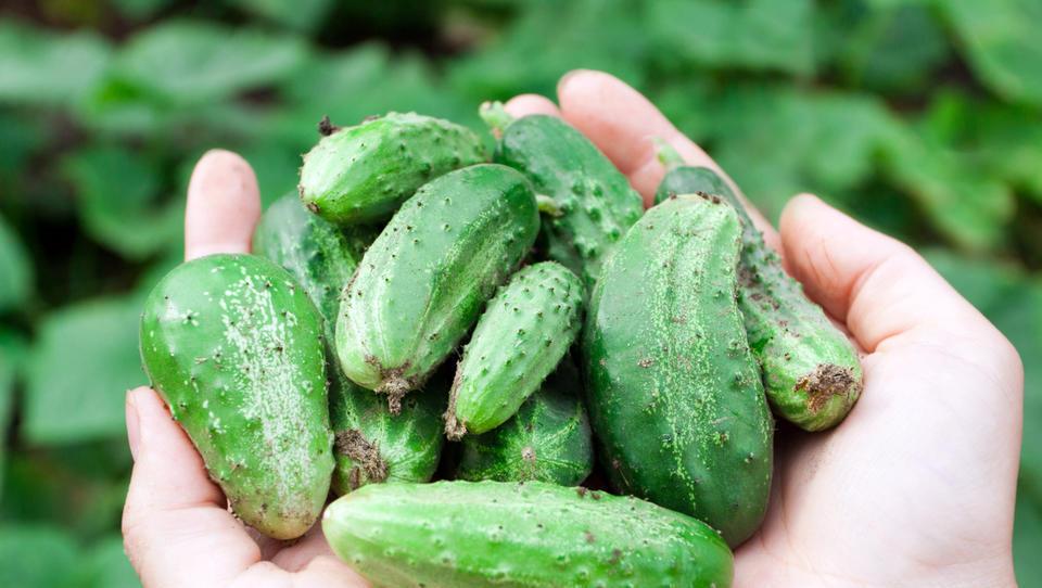 Pri nas zraste manj kumaric, kot jih pojemo