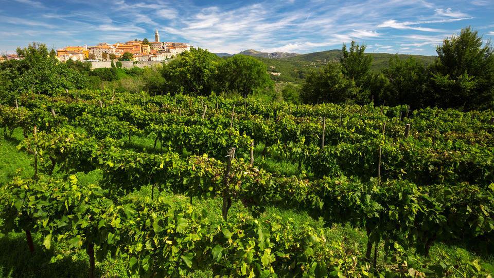 Spremembe pri podporah za vinski sektor