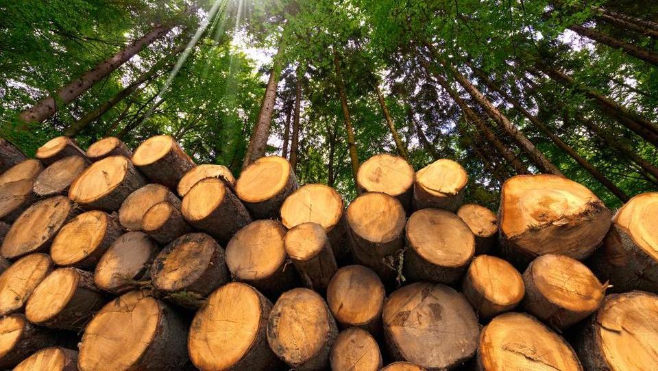 Gozdno-lesna veriga: nastaja slovenski ProHolz