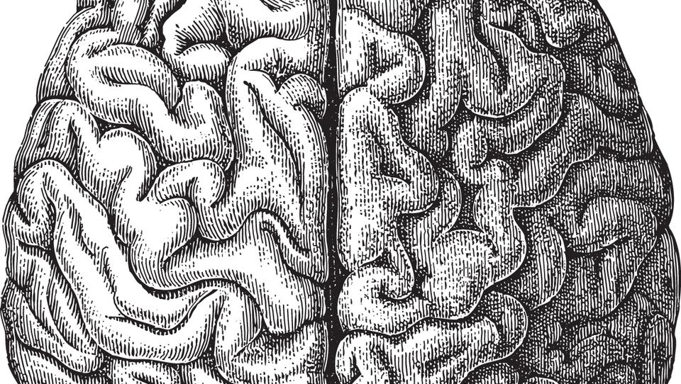 Deformacija lobanje pri starih Majih in Hunih naj ne bi ovirala delovanja možganov