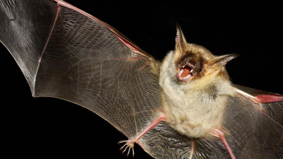 Razpis med počitnicami: monitoring netopirjev, rakov in rib na trasi za drugi tir. Cena? Četrt milijona evrov!