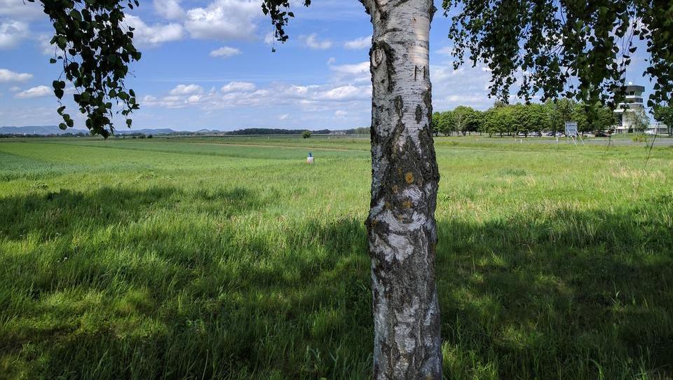 Kaj je Arso zahteval od Magne za ohranjanje narave? Košnjo dvakrat na leto.