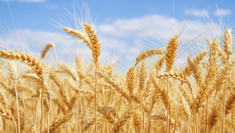 Poljedelske kmetije od države pričakujejo denarno pomoč