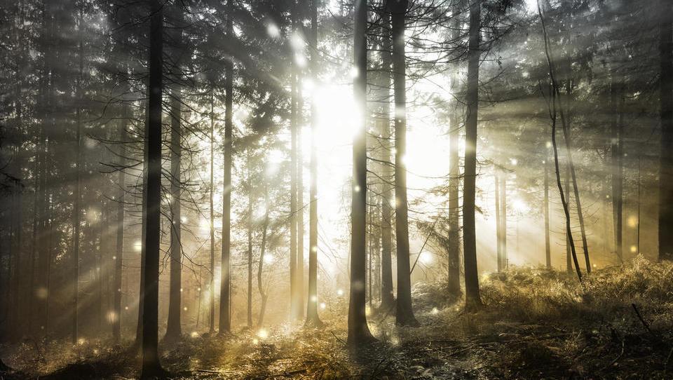 Teden gozdov v znamenju evropskega leta kulturne dediščine