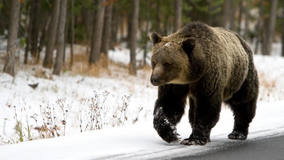 Se je medved prebudil in bo lomastil po vaših prihrankih?