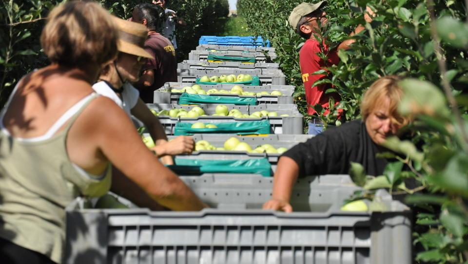 Prihaja prožnejša oblika zaposlitve sezonskih delavcev v kmetijstvu