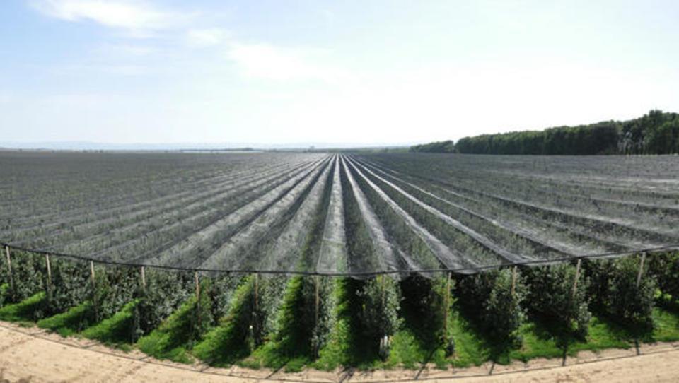 Sadjarji, pozor! 15-milijonski razpis za namakanje in protitočne mreže