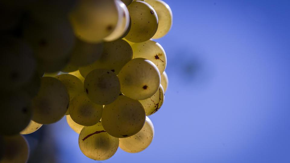 Siol: Kateri Slovenci stojijo za nakupom Vinaga? Ali sta zraven tudi Ahčan in Jenko?